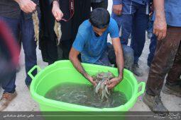 افتتاح پروژه پرورش میگو و ماهی با استفاده از زهاب نیشکر با حضور استاندار