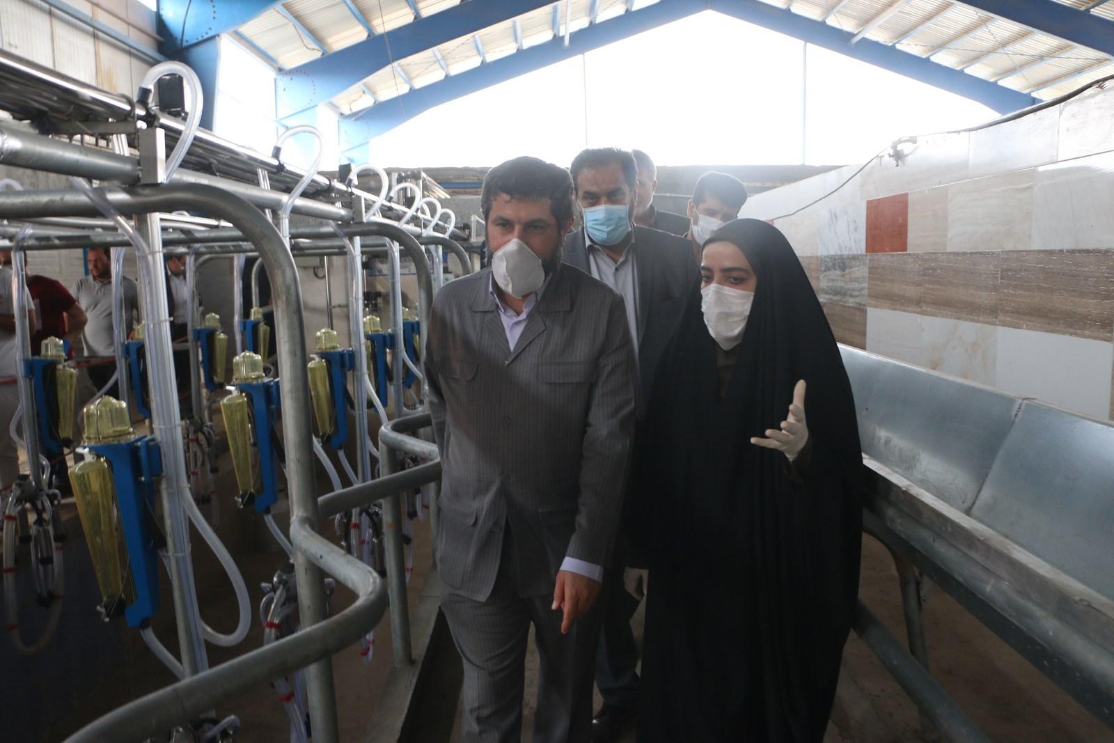 افتتاح دامداری ۵۰۰ راسی گاومیش شیری توام با ماهیان گرمابی در شهرستان کارون