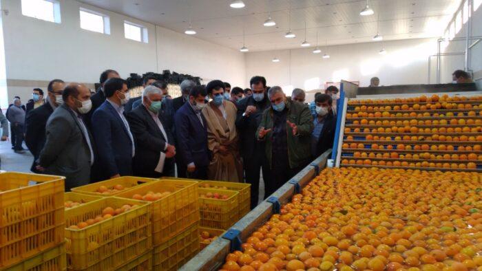 پروژه های صنایع کشاورزی و مواد غذایی در دزفول با حضور استاندار خوزستان کلنگ زنی و بهره برداری شد